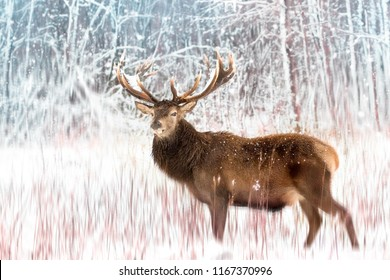 Noble deer male against the winter snow forest. Artistic winter christmas landscape.
