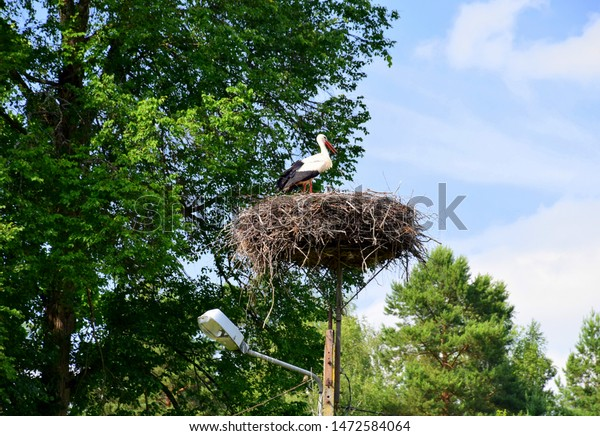A noble red, white, and black stork stanging on the top of its nest made out of branches and hay on a concrete lamp post with some lush coniferous and deciduous trees behind the bird seen in Poland