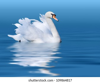 Noble swan with reflection in the blue water
