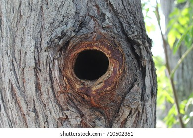 Nobody's home; a hole that's been carved out of my tree, by the wildlife in my yard. - South Texas
