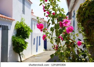 Noirmoutier island village in Vendee. House facade with blue door and blue shutters, roses flowers. Noirmoutier island, Vendee, France.