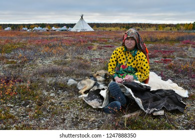 Nomad camp, Yamal peninsula, Russia-September 22, 2018: Housewife of nomad tribe takes a rest in front of camp with her reindeer laika.