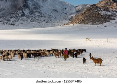 Nomad herder of Mongolia taking care of his livestock during winter