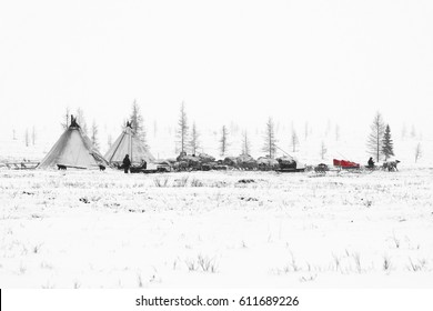 Nomadic tribe prepares to season migration in the polar tundra at a frosty day. Chum, sled and other stuff are located around camp.
