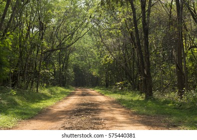 Non asphalt road in the forest, Thailand
