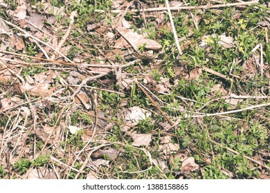 non specific nature forest bed details of foliage, close up macro image with leaves, branches and plants on blur background, suitable for textures - vintage retro look