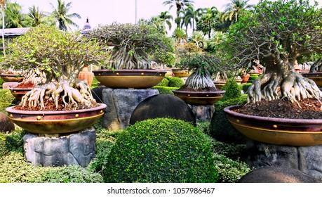 Nong Nooch Tropical Botanical Garden, Pattaya City, Thailand