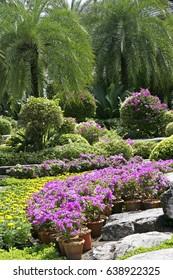 Nong Nooch tropical garden in Pattaya, Thailand, Asia, 30. October 2005