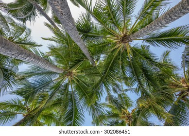 Noon shade under a grove of coconut palm trees with blue, white, green gold, and tan colors.