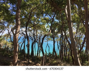 Noosa head with trees in the foreground