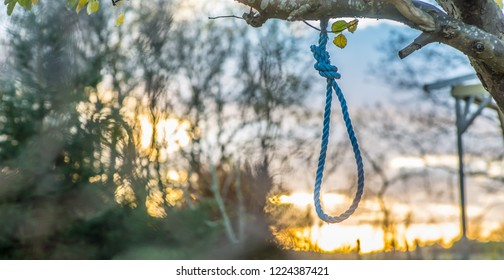 A noose hanging from a tree outside at sunset.