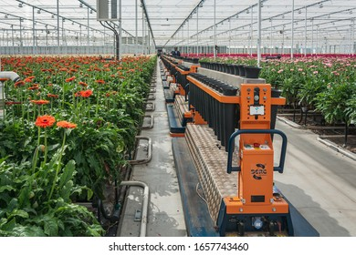 Nootdorp, The Netherlands, April 7, 2019:  Rows of flower holders are ready to be filled with flowering gerberas in a huge greenhouse