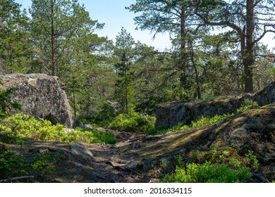 Nordic forest area on a sunny day. High Coast, Harnosand, Sweden