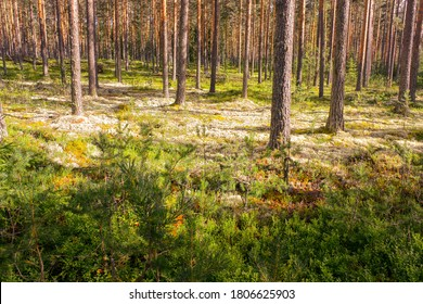 The Nordic Forest in Norway