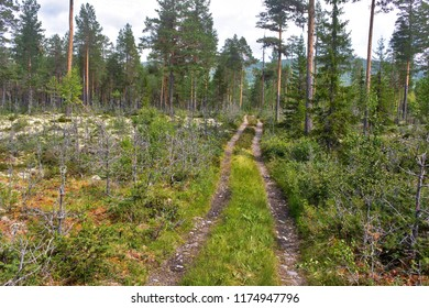 Nordic forrest and road