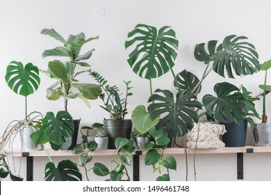 nordic style appartment with tropical flowers decoration. urban jungle interior