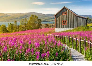 Nordic summer landscape