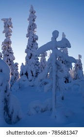 Norefjell / Norway: Bizarre winter landscape in a blue magic forest
