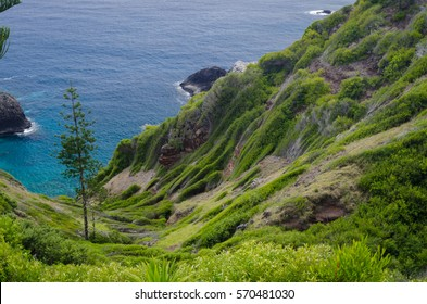 Norfolk Island with Norfolk pine in bush and ocean shore line