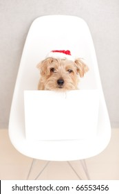 norfolk terrier dog with empty board at Christmas