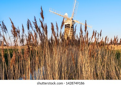 Norfolk windmill through Norfolk reeds at sunset