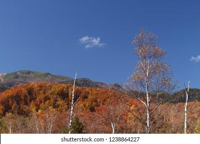 Norikura-kogen plateau in autumn