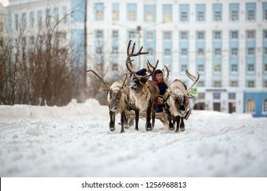 Norilsk, Krasnoyarsk region, Russia - November 17, 2018: Reindeer team in Norilsk city. Argish ethnic festival.