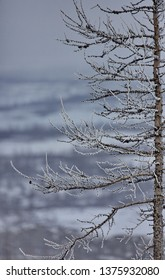 Norilsk, nature of the north