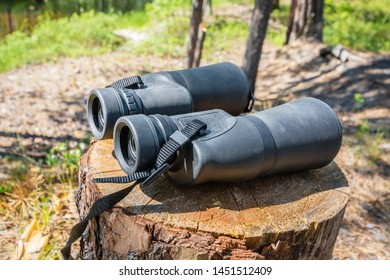 Normal binoculars on stump in forest on sunny day