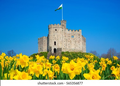 Norman Keep, Cardiff Castle, Daffodils, Cardiff, Wales, UK