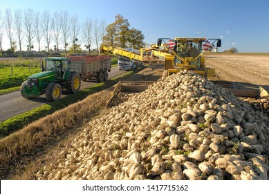 Normandie, France, November 2007. Piles of sugar beets along the edge of a road. Loading of beet in a skip of tractor with a crane.