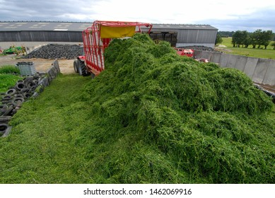 Normandy, August 2006.
