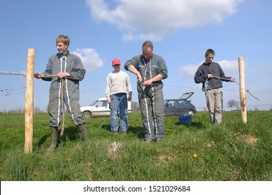 Normandy, France, April 2010. Repair of fences of a meadow by a farmer with his son and his father. Family assistance. Grubbing-up of old and plantation of new wooden stake.