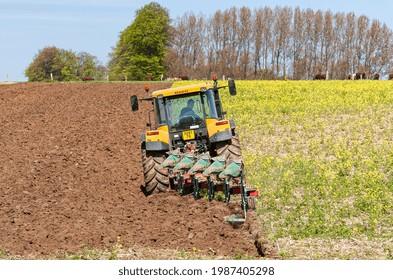 Normandy, France, August 2011. Field summerfallow of white mustard as vegetation cover to prevent soil erosion during the winter. Spring soil tillage before seeding