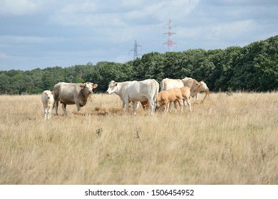 Normandy, France, August 2019.