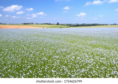 Normandy, France, June 2010. Flax crop. Field of flax in blossom. Blue flowers