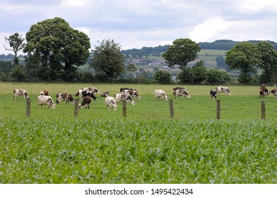 Normandy, France, June 2013.