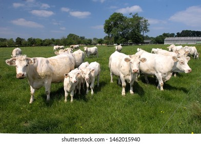 Normandy, France, May 2008.