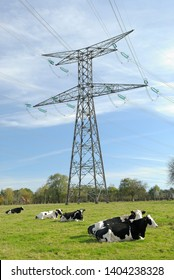 Normandy, France, November 2013. High-tension pylon on a meadow with cow prim' holstein race