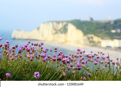 Normandy landscape / Etretat (Normandy, France) landscape: Armeria maritima flower on the foreground with the famous falaise of Etretat on the blurred background