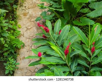 North America, Mexico. Chiapas, Tuxtla Gutierrez. A pathway leads through a virtual jungle of lush plants in Southern Mexico.