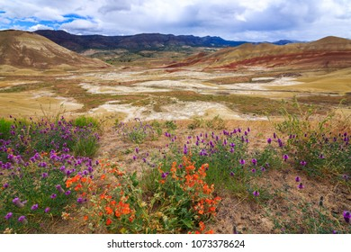 North America, United States, Oregon, Central Oregon, Redmond, Bend, Mitchell. Series of low clay hills striped in colorful bands of minerals, ash and clay deposits. Desert wildflowers.