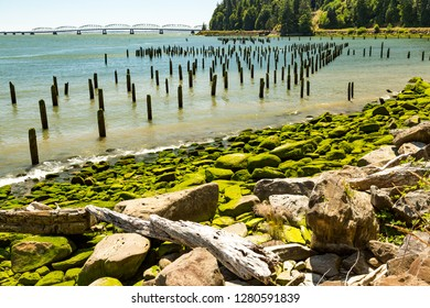 North America, Washington State, Pacific County, Megler,  Astoria Bridge, Columbia River. North Shore of the Columbia River. Pilings. Sea Weed covered, rocky beach.