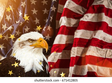 North American Bald Eagle with American flag.