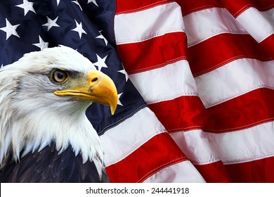 American Flags with Eagles Images, Stock Photos & Vectors