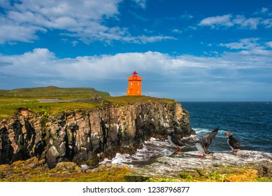 North Atlantic puffins sitting in front of orange lighthouse in Iceland