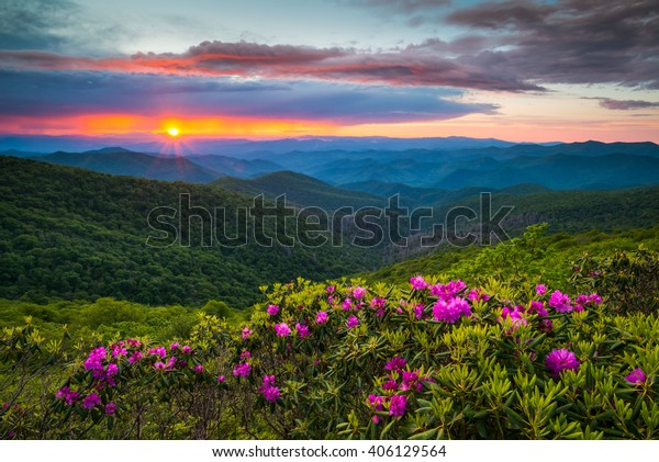 North Carolina Blue Ridge Parkway Spring Flowers Scenic Landscape south of Asheville, NC in the southern Appalachian Mountains