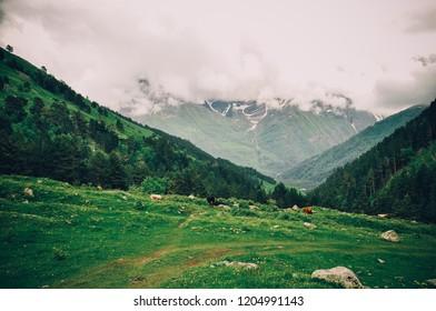 North Caucasus. Elbrus. Mountains. Fog in the mountains.