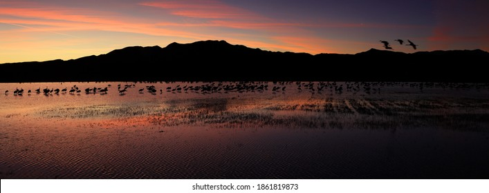 North crane pond, Bosque del Apache, National wildlife refuge