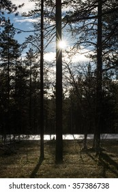 North Finland forest in the Arctic Circle